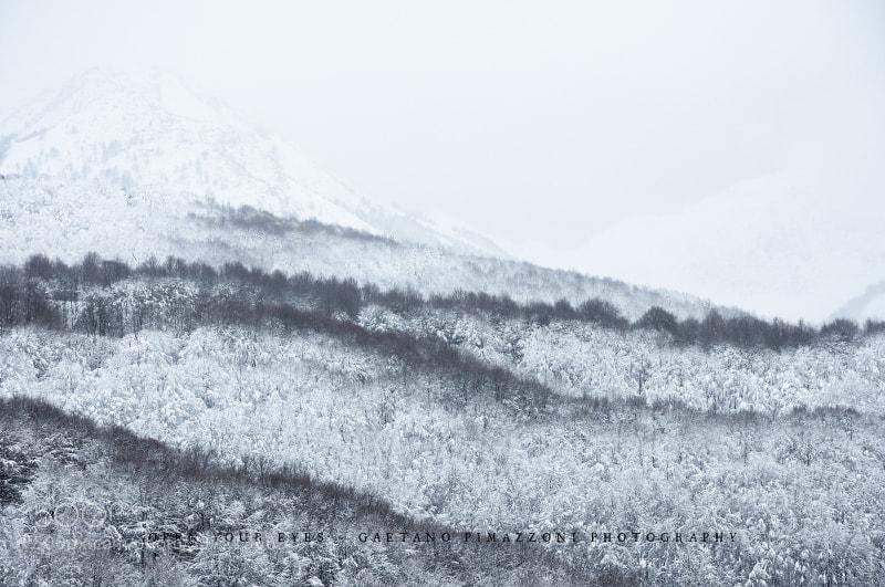 Photograph Inside winter by Gaetano Pimazzoni on 500px