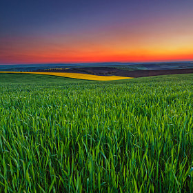 Twilight Fields by Evgeni Dinev (evgord)) on 500px.com