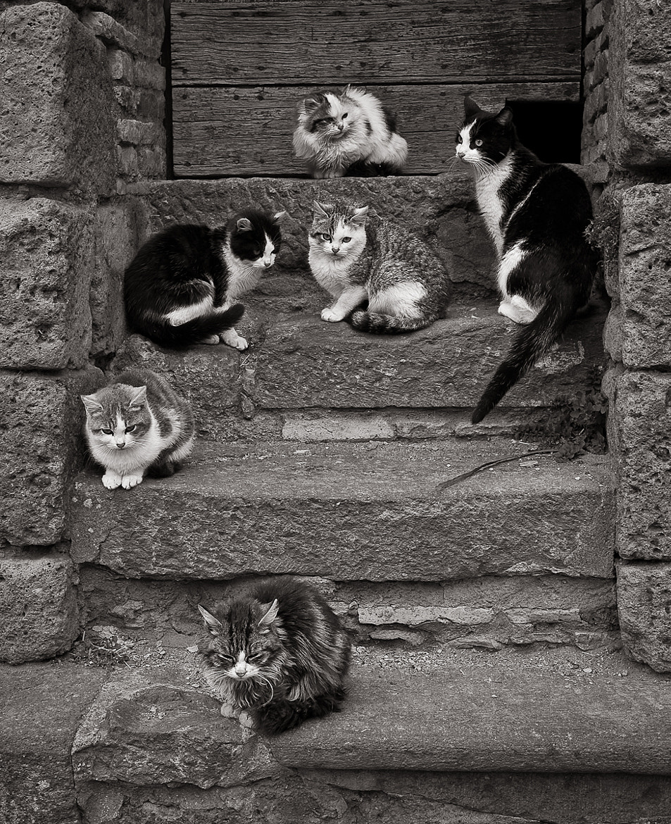 Photograph Step cats by Michael Avory on 500px