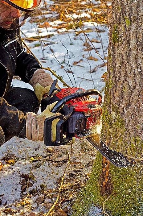 Photograph Got wood? by Ragnar Gjemmestad on 500px
