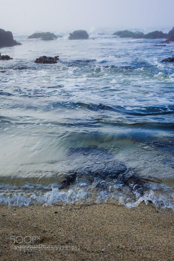 Bodega Head, CA by Joshua Davis Photography