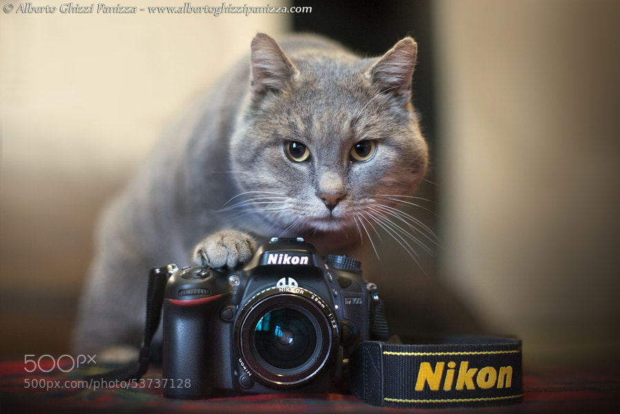 Photograph I'm a real professionist by Alberto Ghizzi Panizza on 500px