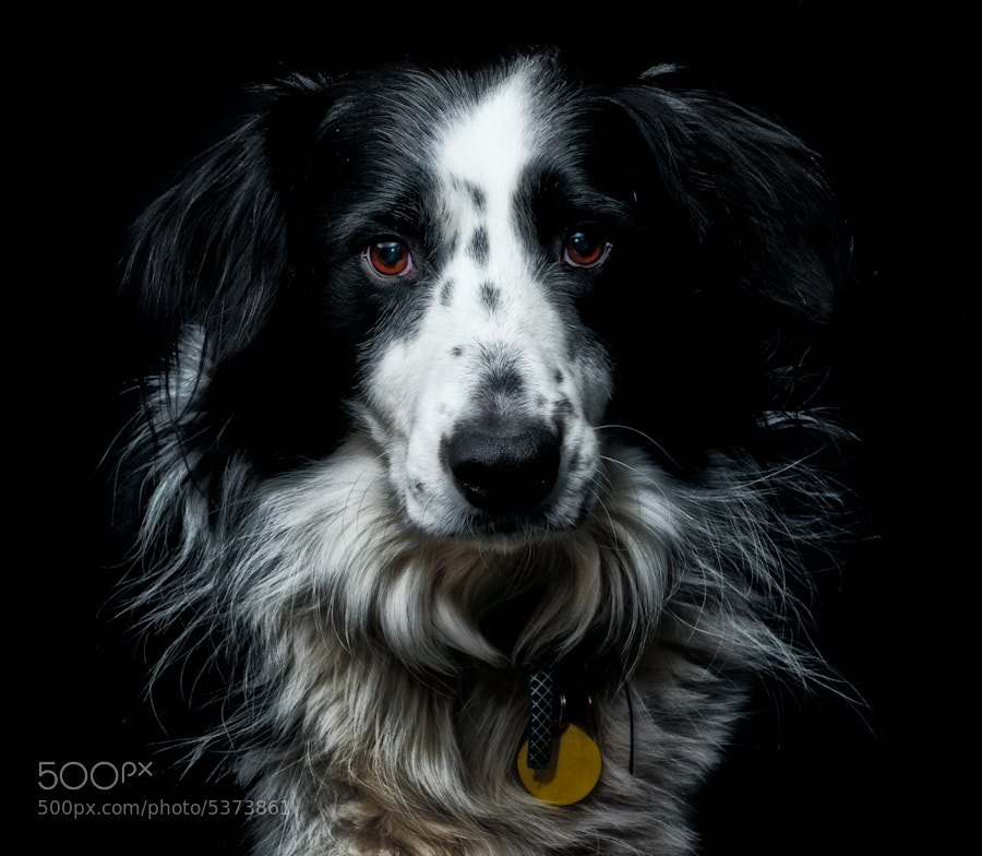 Photograph murphy by dj harder on 500px