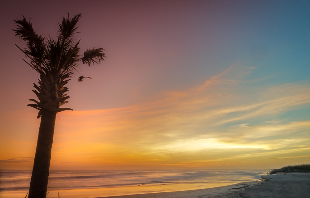 Photograph Palm tree at sunset by Carmen Sisson on 500px