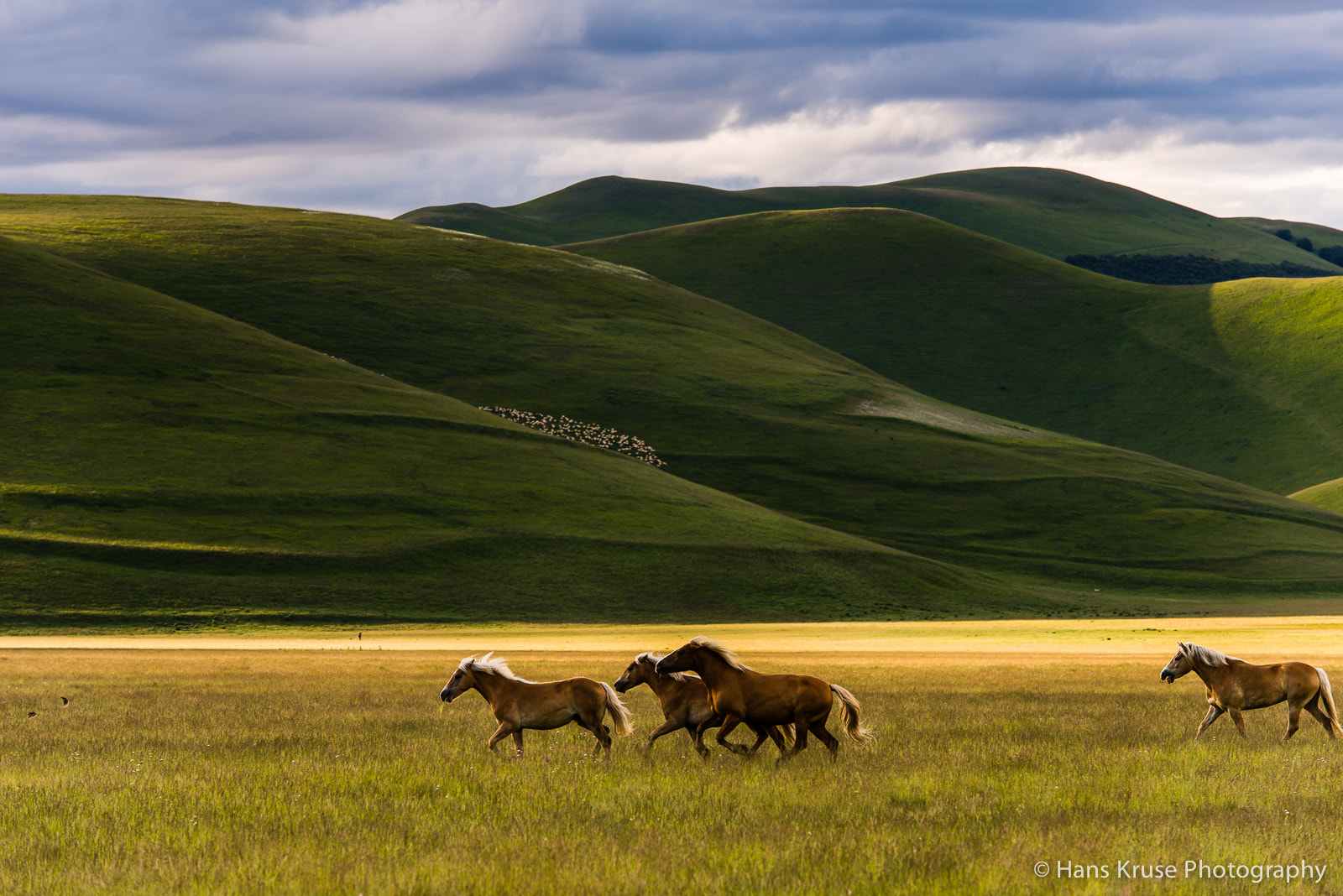 Photograph Horses on Piano Grande at Castelluccio by Hans Kruse on 500px