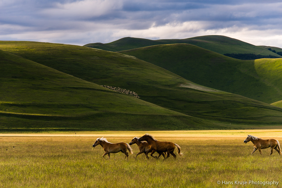 This photo was shot during preparation for the June 2014 photo workshop in Abruzzo and Umbria. This workshop is now sold out, but there is another workshop in October 2014.