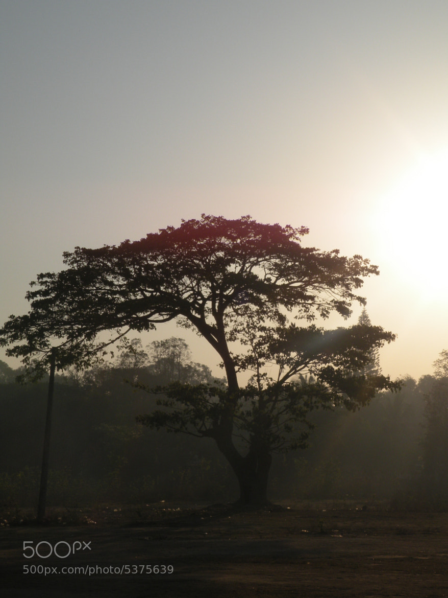 Photograph Morning Tree........ by krishna prasad on 500px