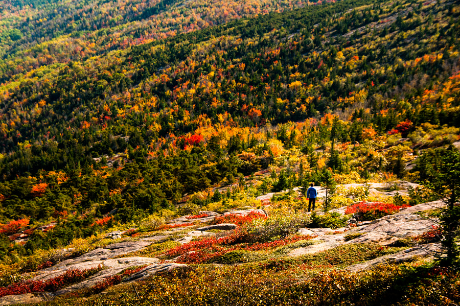 Photograph Fall colors on Cadillac Mountain by Gautam Phookan on 500px