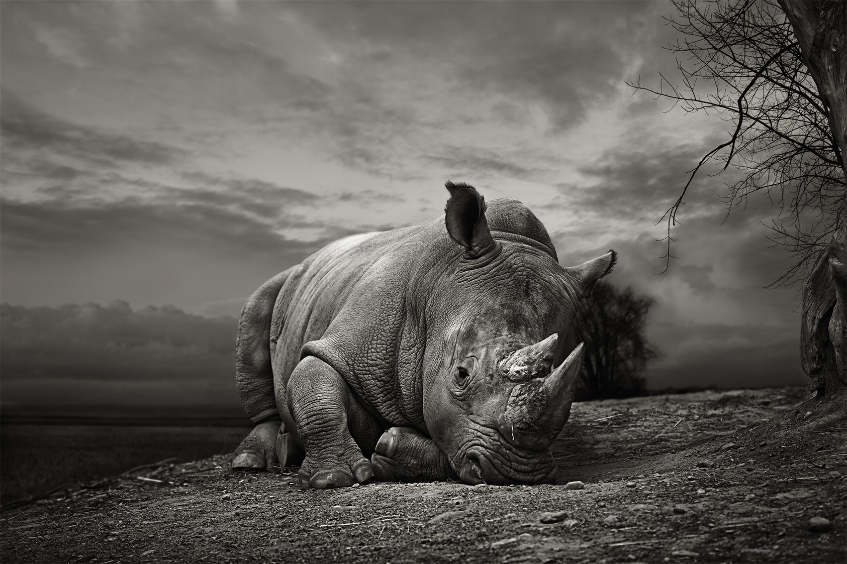 Photograph White Rhino by Thomas Marasco on 500px