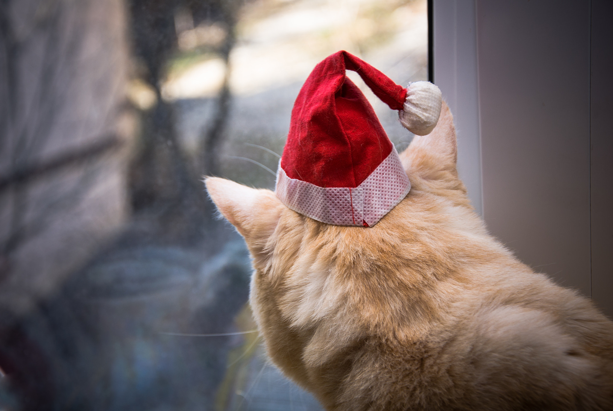 Photograph Do Cats Dream Of Santa?* by Dockside Colors on 500px