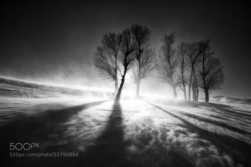 Photograph Storm by Ali Shokri on 500px