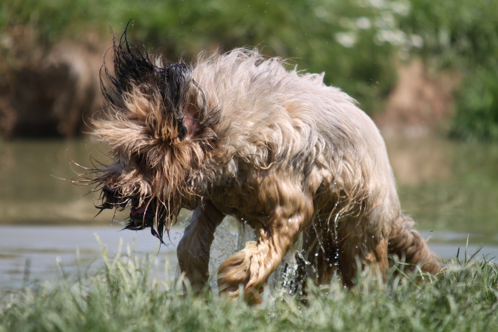 Photograph Briard in Fly by  Demuth on 500px