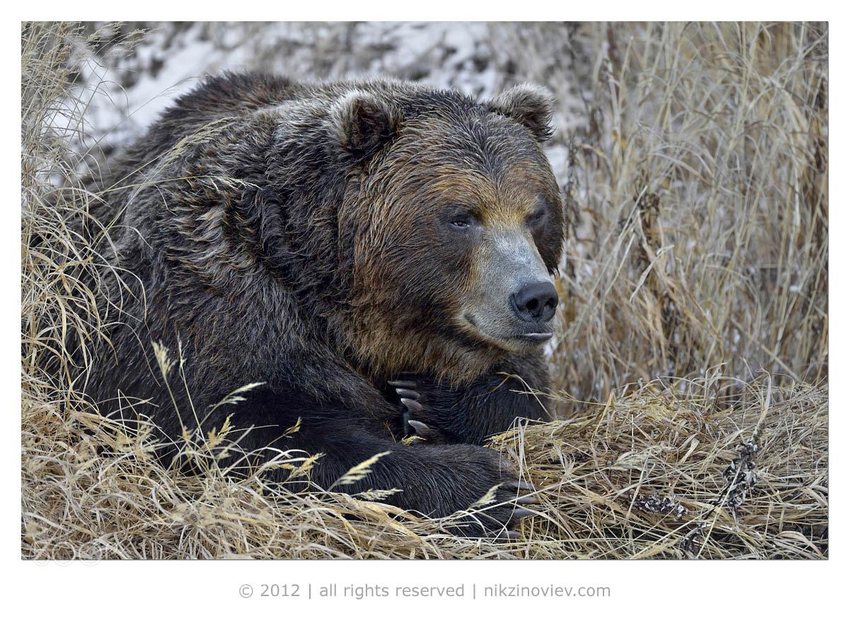Photograph Ilya Muromets by Nikolai Zinoviev on 500px