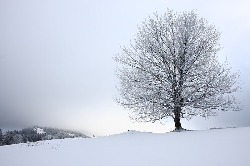 Photograph Pureté hivernale by Raphaël Richardet on 500px