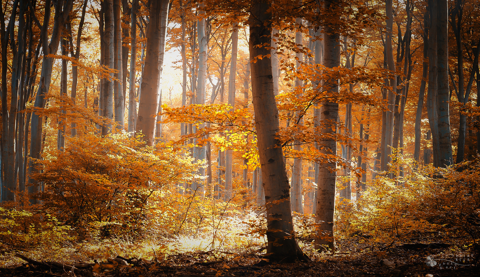 Photograph Shine Like Gold by Ildiko Neer on 500px