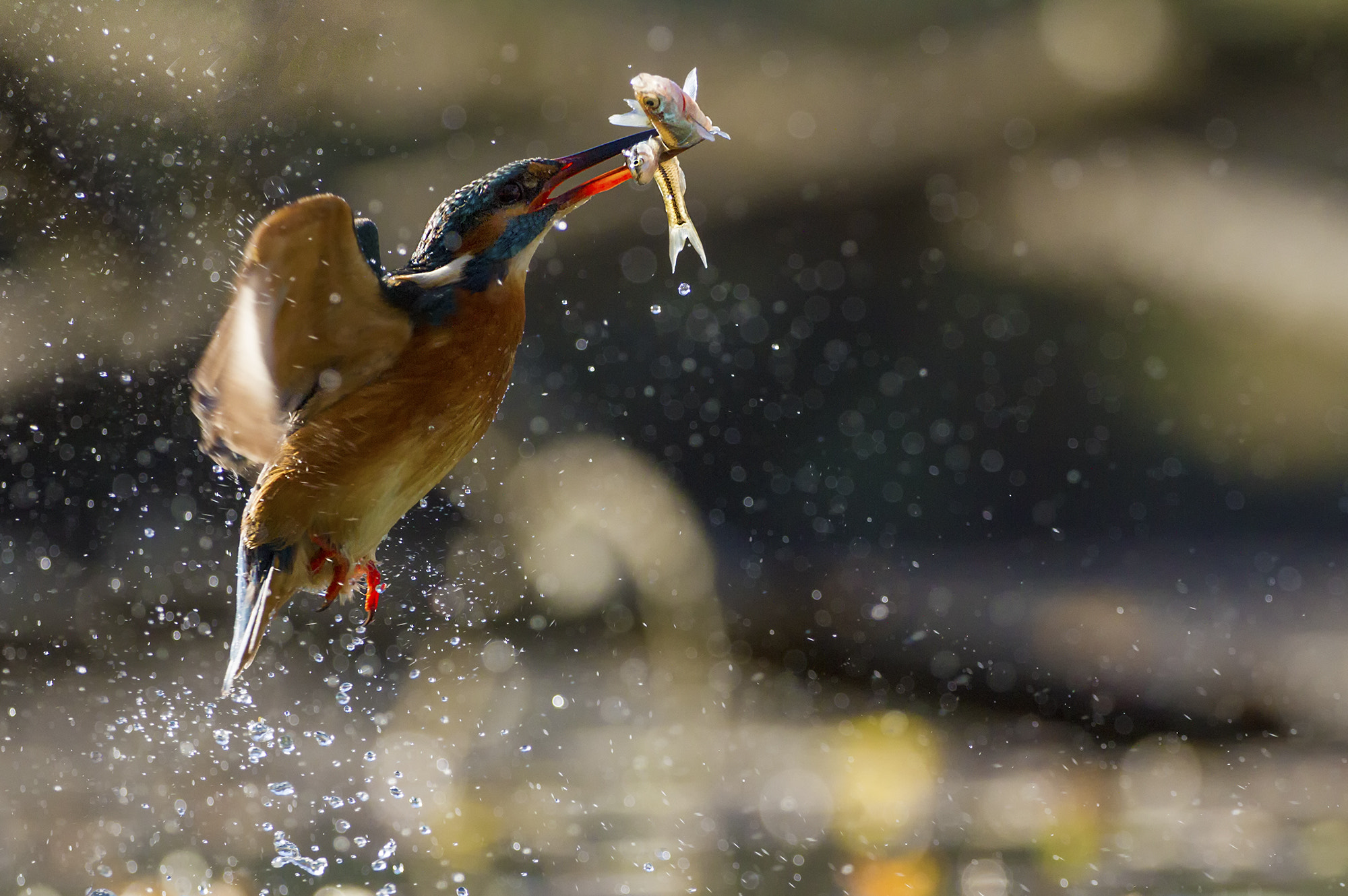 Photograph Double catch! by Marco Redaelli on 500px