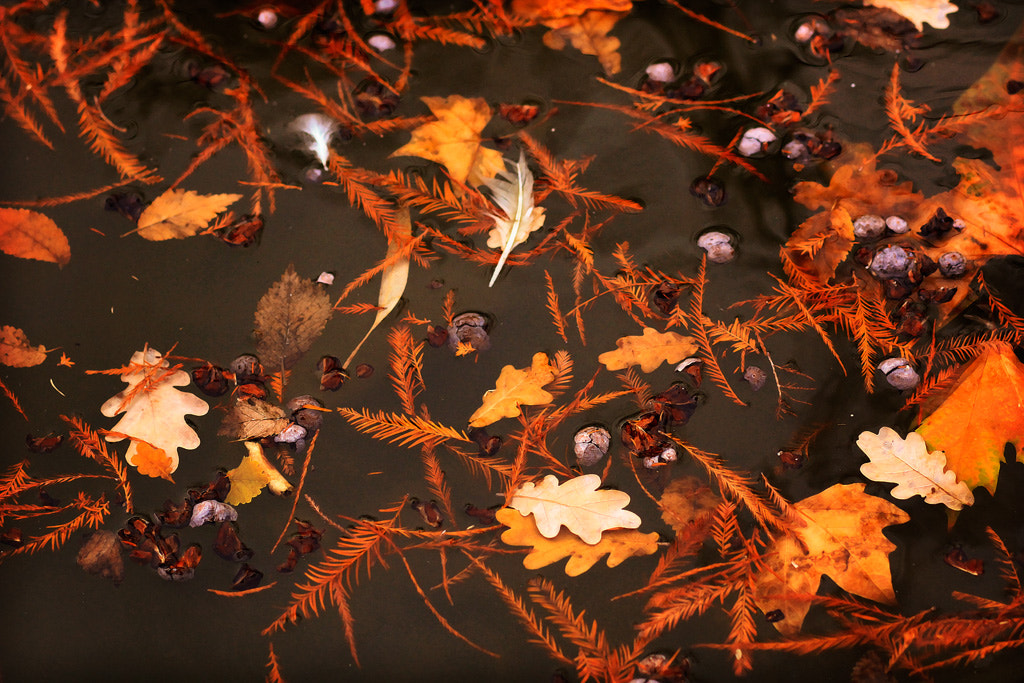 Photograph red leaves on water by carolina madruga on 500px