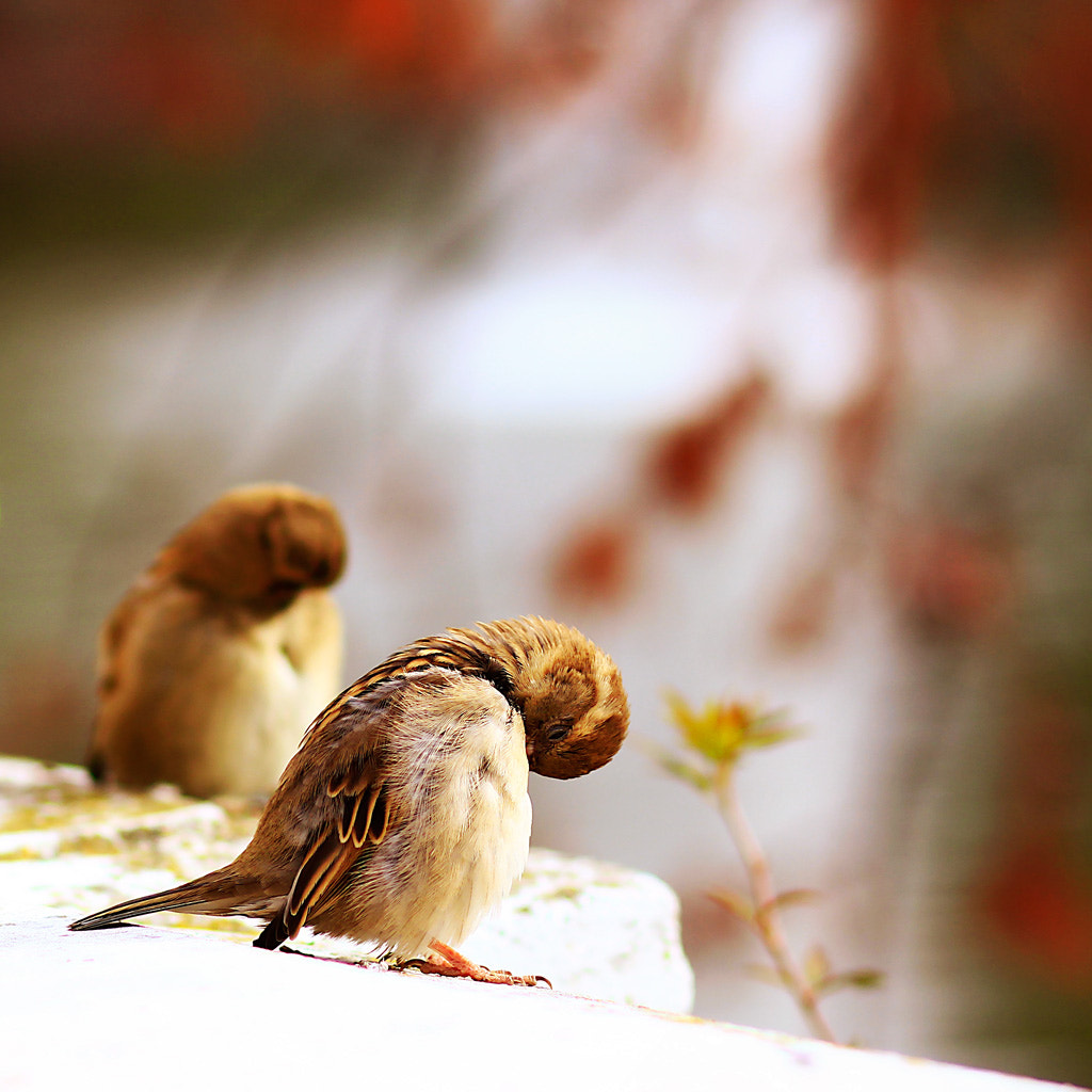 Photograph two birds by carolina madruga on 500px
