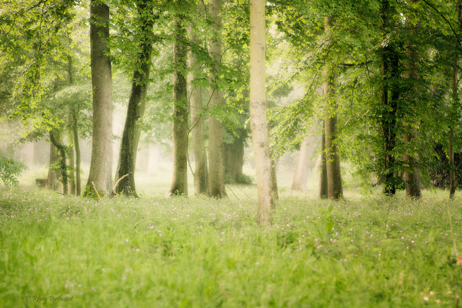 Photograph The Forest by Remy Perthuisot on 500px