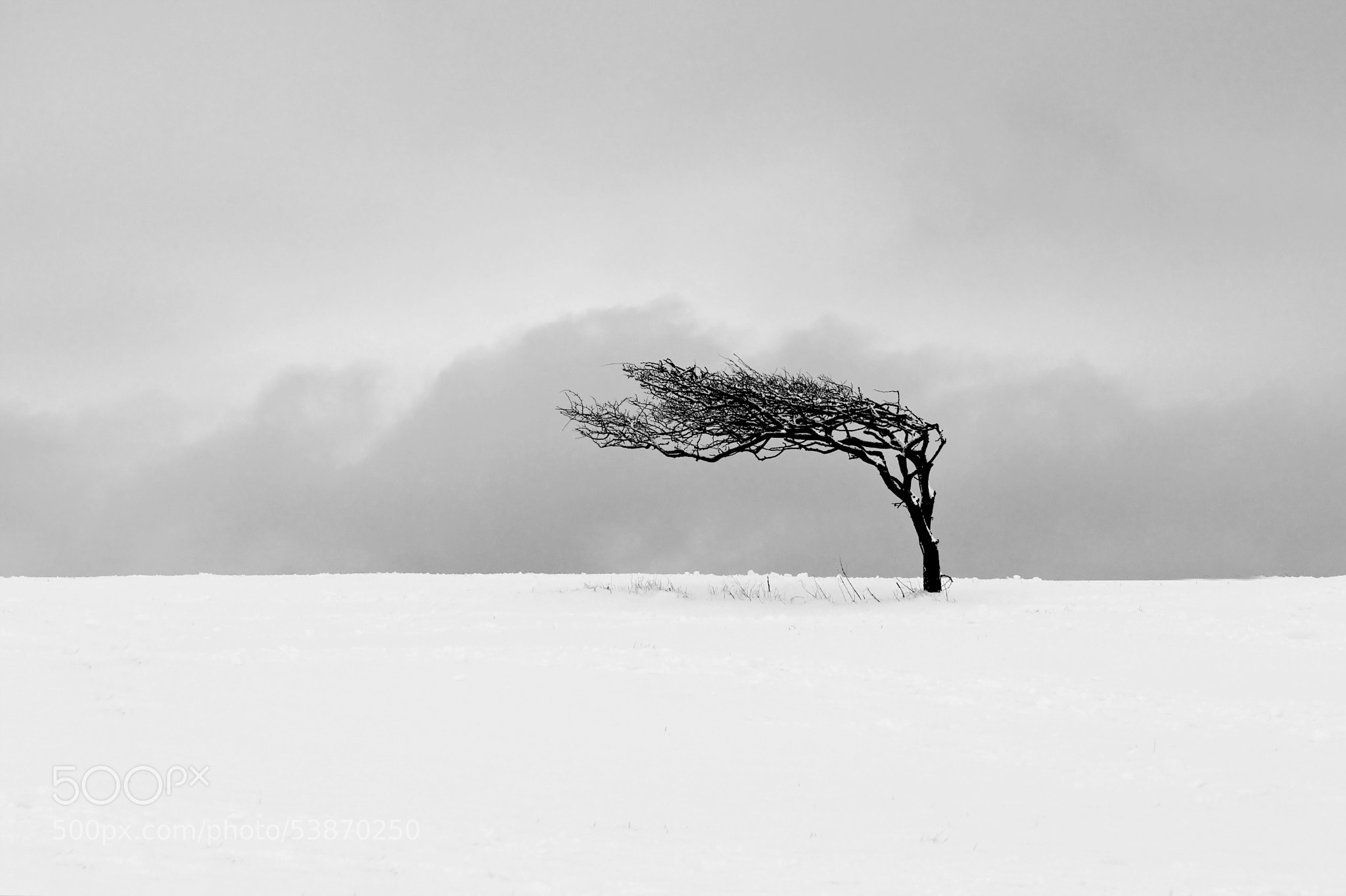 Photograph Winter Tree (East Sussex UK) by Fern Blacker on 500px