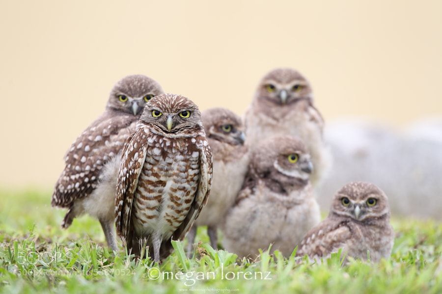 Photograph Family Portrait by Megan Lorenz on 500px