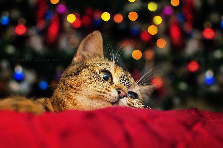 Waiting for Santa by Zoran Milutinovic on 500px.com