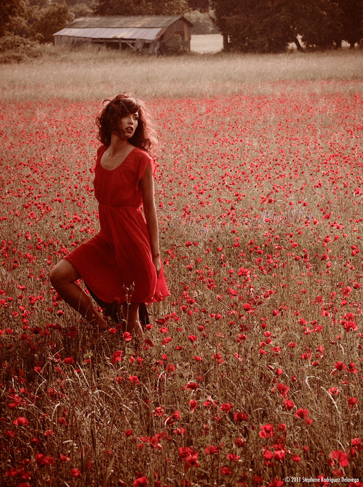 Photograph coquelicot by Stephane Delavega on 500px