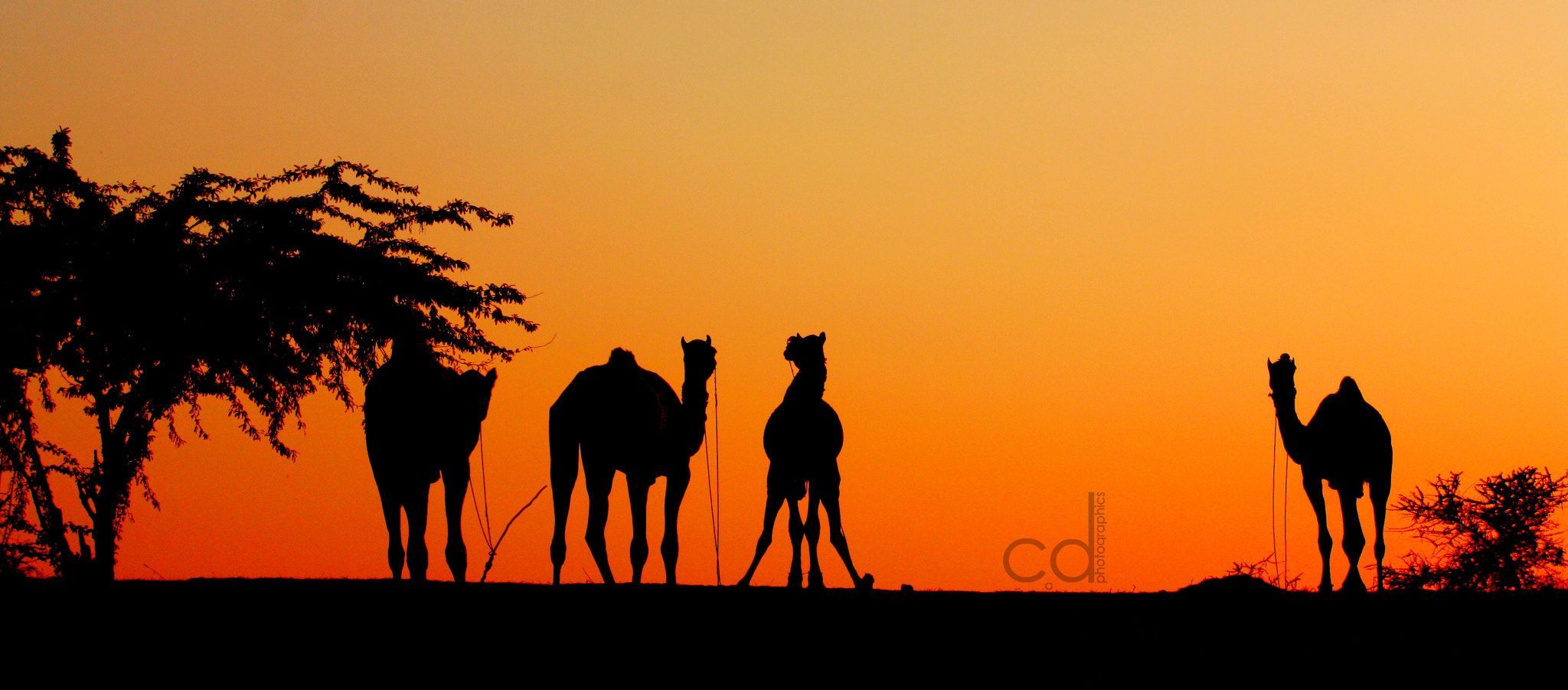 Photograph Desert Silhouette by Arpit Modi on 500px