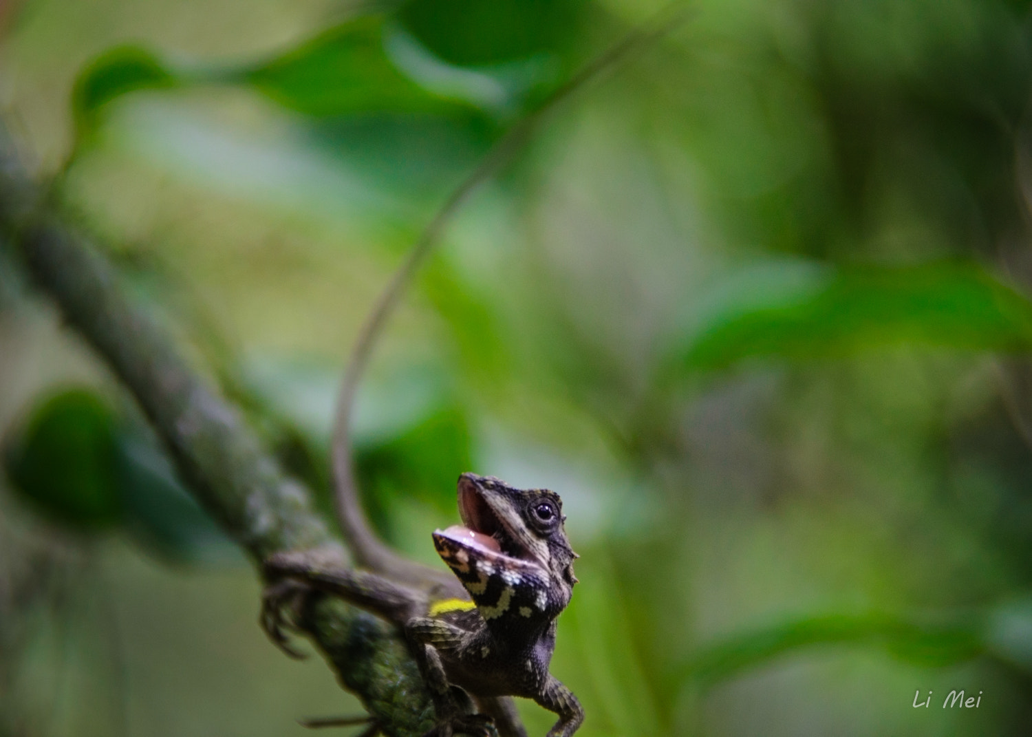 Photograph Hi !! ....(Scene stealing Lizard) by Laura Lin on 500px