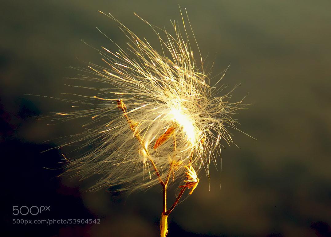 Photograph Fireworks by Jenny Haritou on 500px