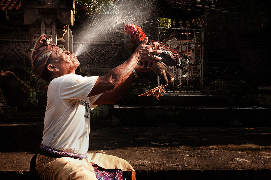 Photograph Spraying Cock by Jeffry Surianto on 500px