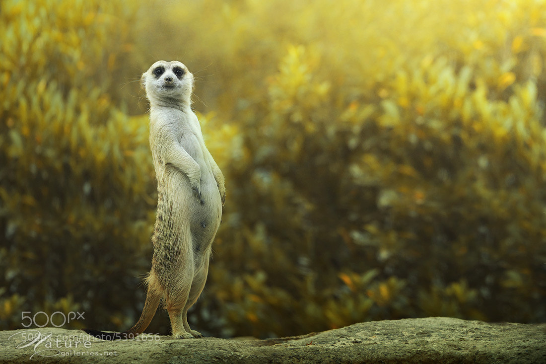 Photograph Stand up by Sasi - smit on 500px