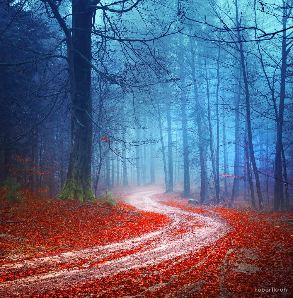 Photograph A road by Robertiez on 500px