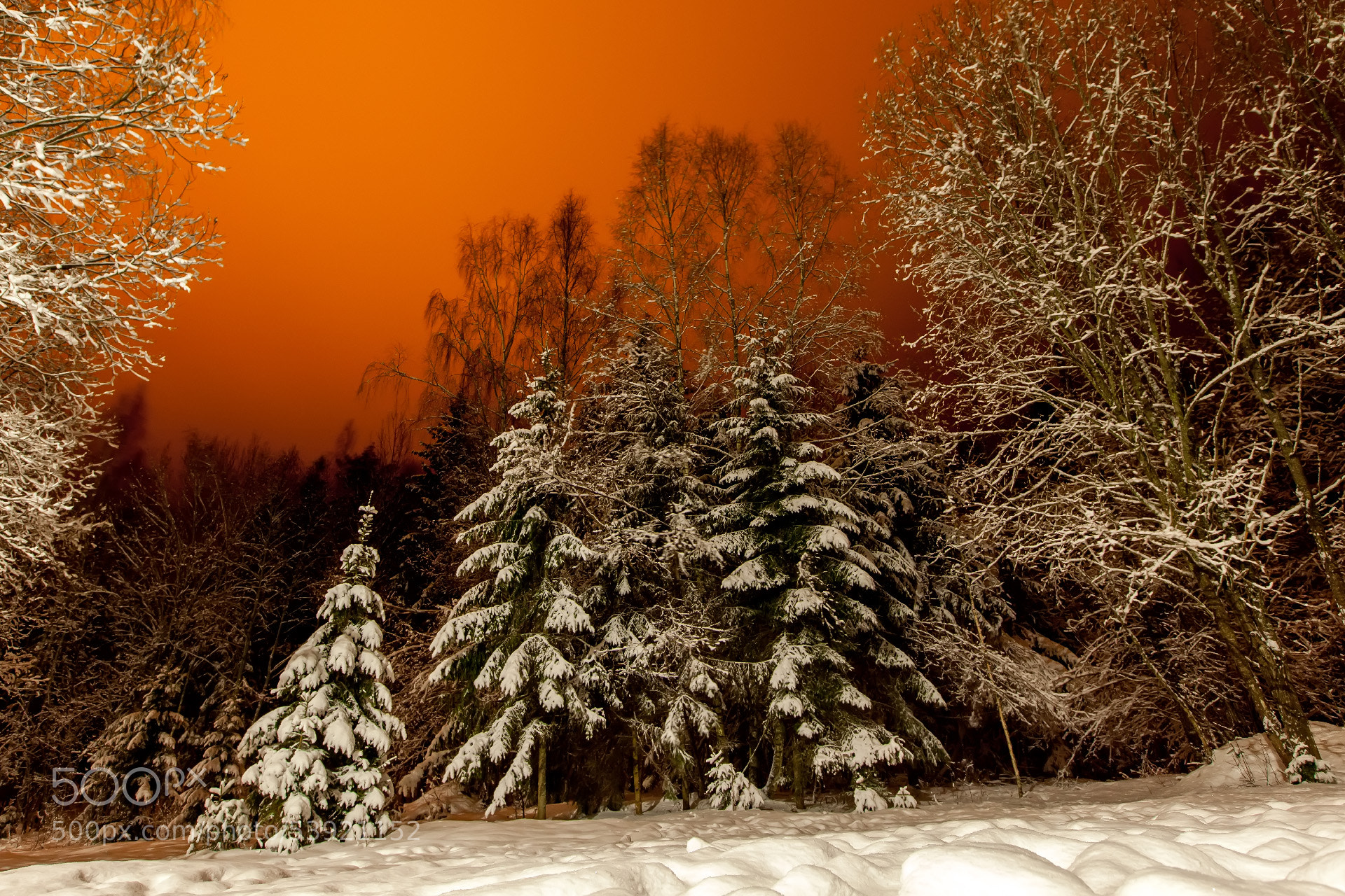 Photograph Forests of Belarus by Vasiliy Stepanovskiy on 500px