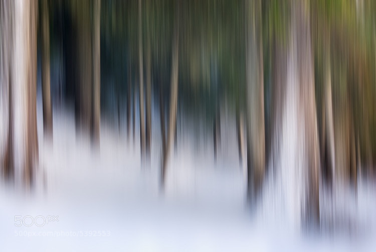 Photograph Enchanted Forest. by Brian Adelberg on 500px