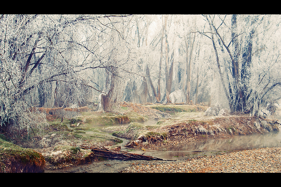 Photograph A fairy forest by Greta Spinoni on 500px