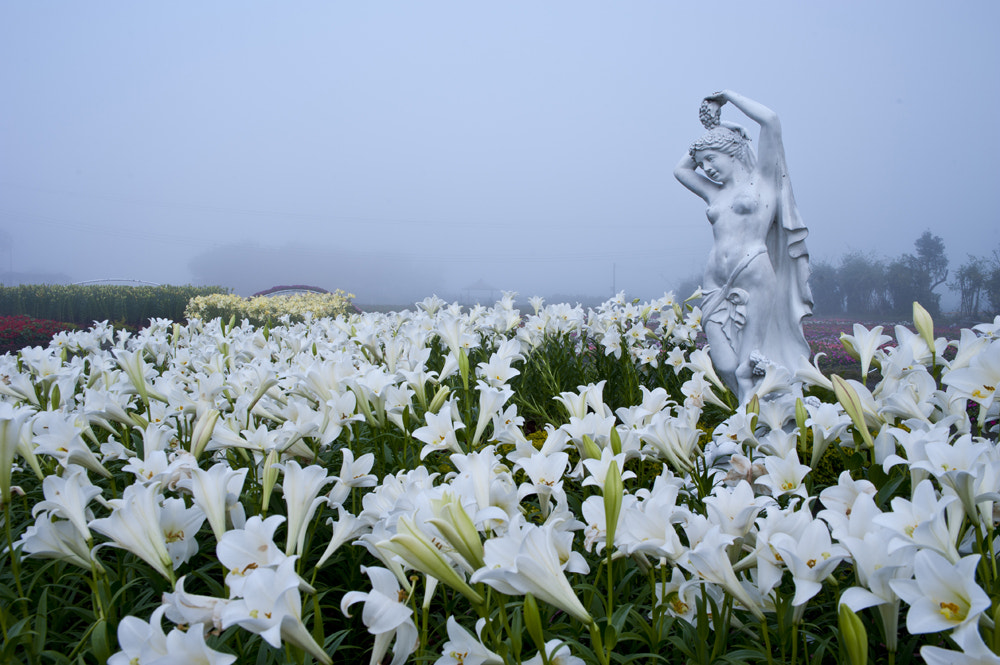 Photograph Flower in the fog by taya liu on 500px
