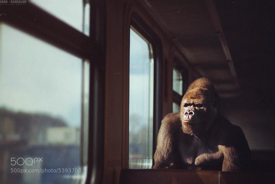 Photograph Exotic passenger by Igor Scheglov on 500px