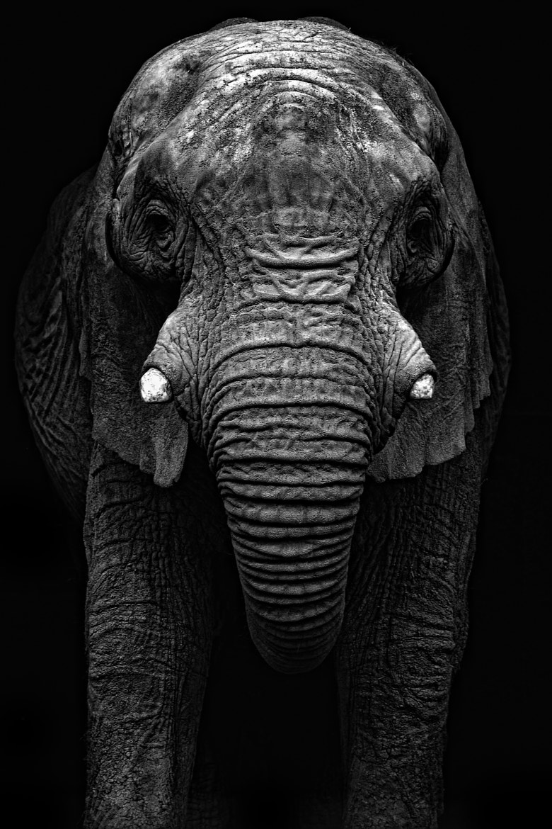 Photograph Big Daddy reworked by ZeroPix Photography on 500px