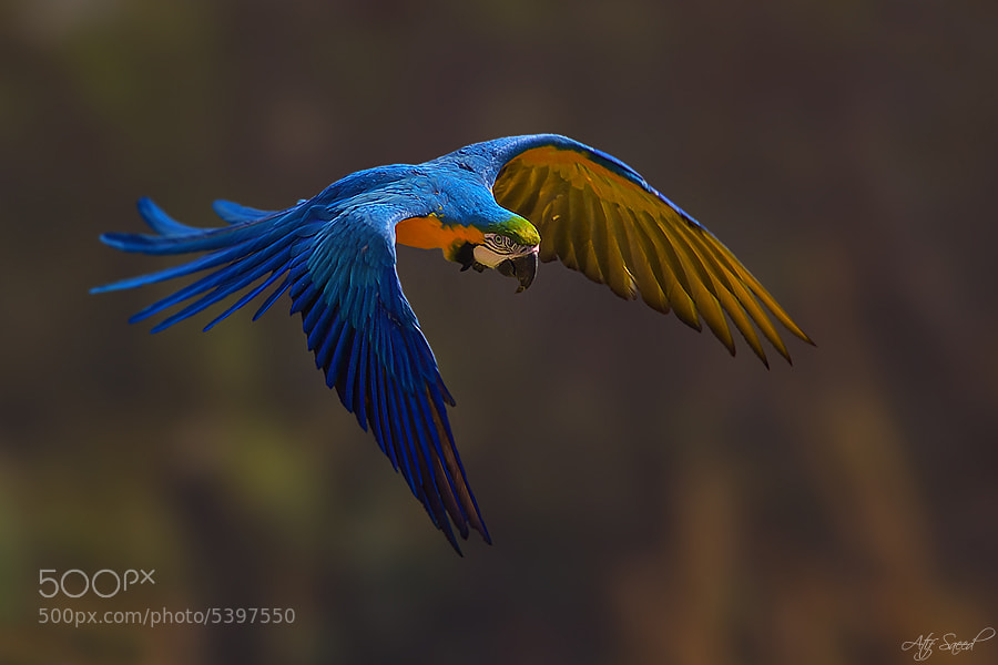 Photograph Flight.. by Atif Saeed on 500px
