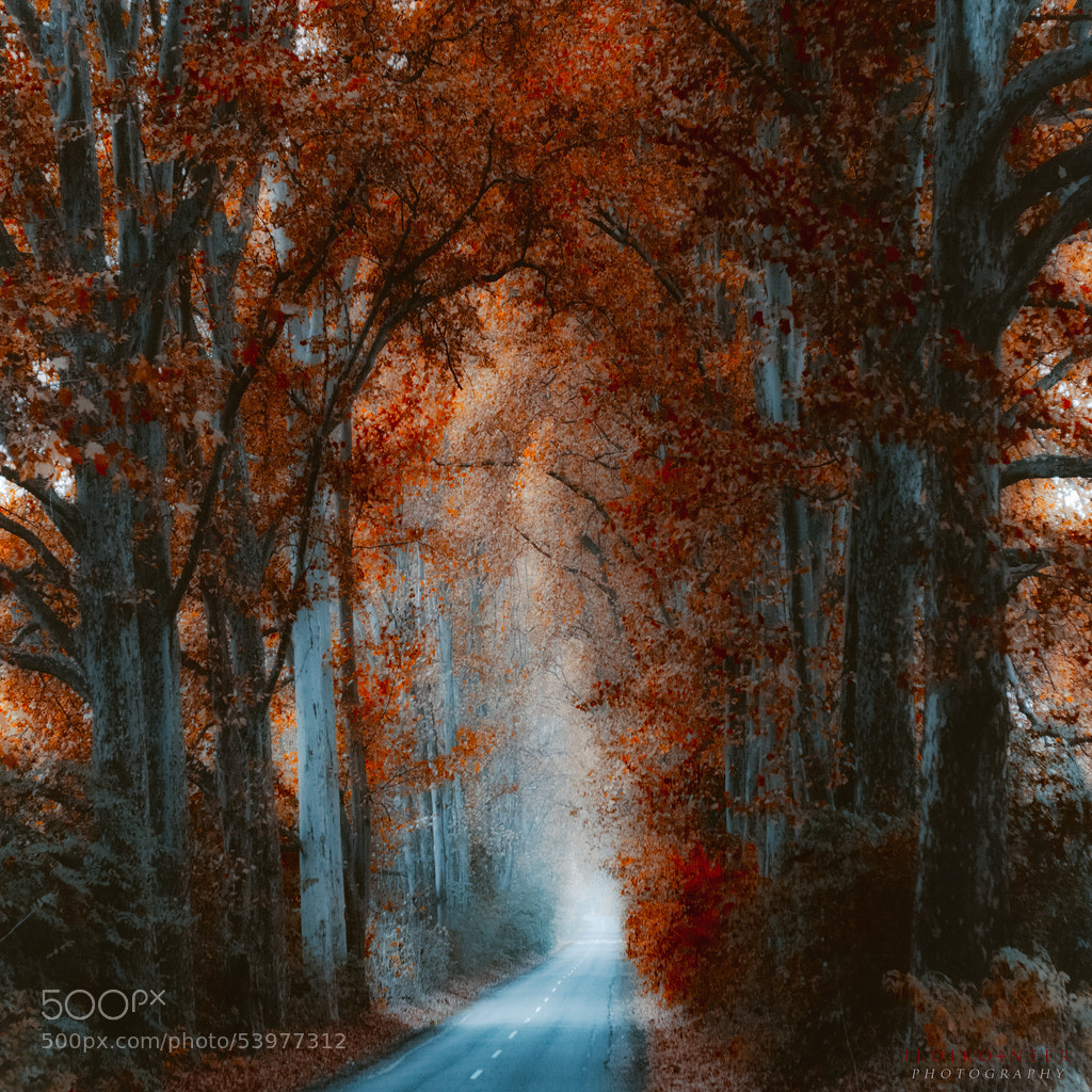 Photograph Cathedral by Ildiko Neer on 500px