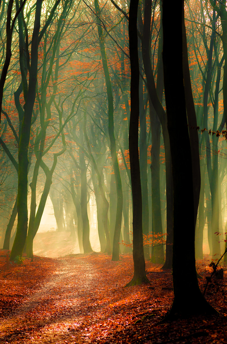 Photograph Speulderbos 12 by Mr. DESHAMER on 500px
