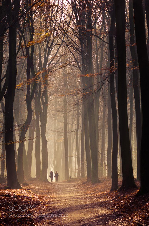 Photograph Speulderbos 13 by Mr. DESHAMER on 500px