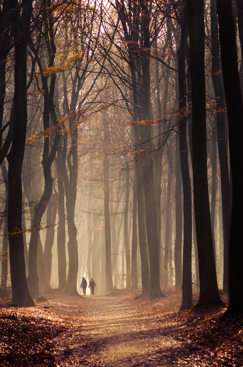 Photograph Speulderbos 13 by Mr. DESHAMER on 500px