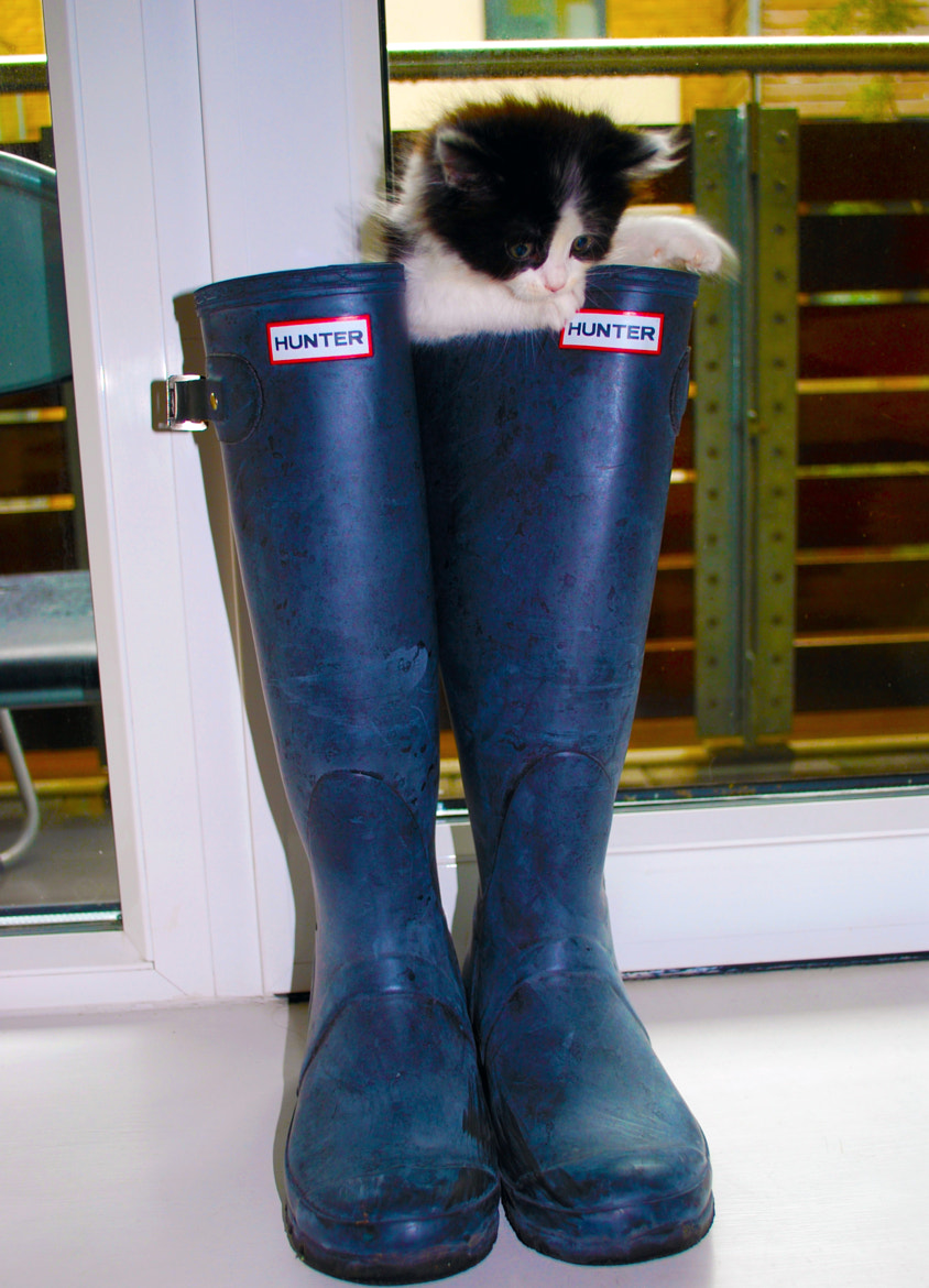 Photograph Puss in boots :D  by Kseniya Clarke on 500px