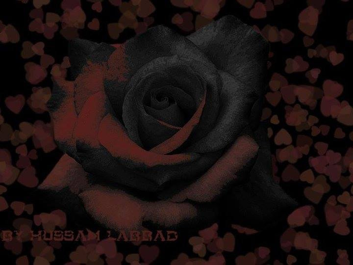 Photograph Burning Black/Red Rose by Housam A Labbad on 500px