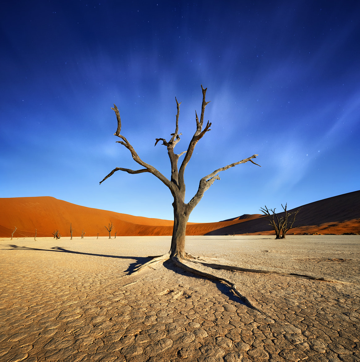 Photograph 900 years old ! by Patrick Galibert on 500px