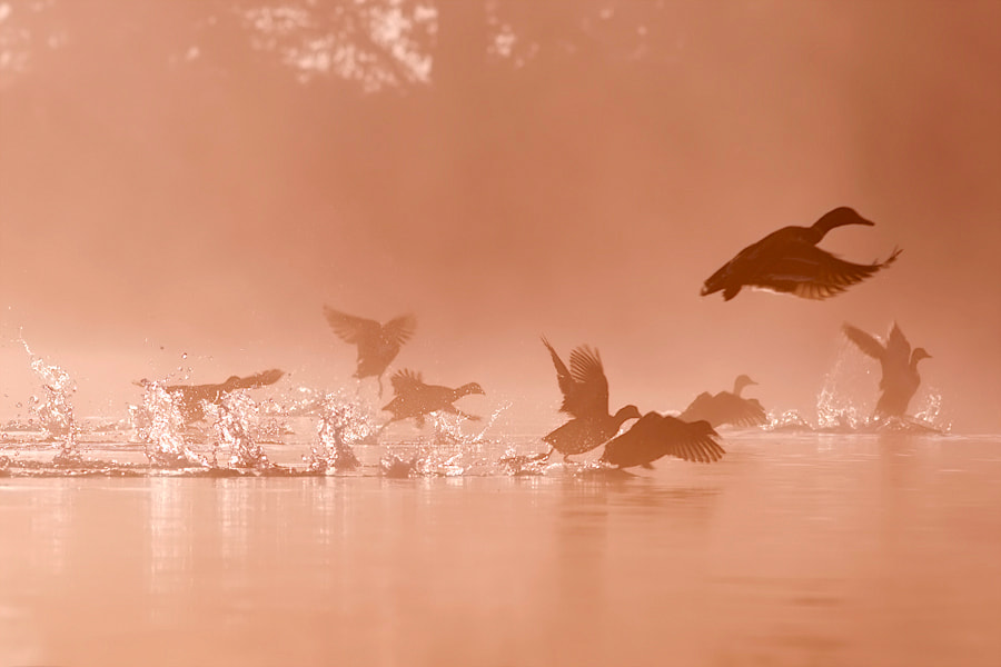 Photograph Waking up, Taking off by Roeselien Raimond on 500px