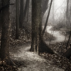 Постер, плакат: The Foggy Path