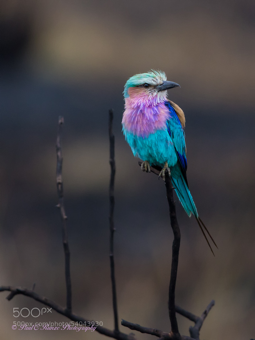 Photograph Just Another Roller by Paul Runze on 500px